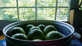 Frutas de la pasión Fotos de archivo libres de regalías