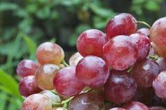 Frutas de la uva Foto de archivo