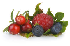Frutas de madera Imagen de archivo
