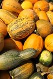 Frutas de una calabaza madura imagenes de archivo
