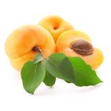 Frutas del albaricoque Imágenes de archivo libres de regalías