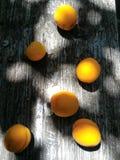 Frutas del albaricoque Fotografía de archivo