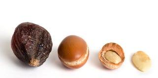 Frutas del Argan Foto de archivo libre de regalías