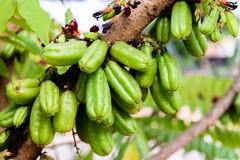 Frutas del bilimbi del Averrhoa Foto de archivo