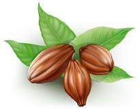 Frutas del cacao ilustración del vector