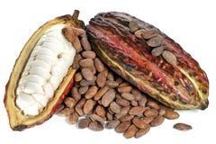 Frutas del cacao Fotos de archivo