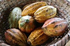 Frutas del cacao en una cesta Imagenes de archivo