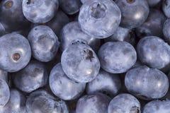 Frutas del corymbosum septentrional del Vaccinium del arándano del highbush, fondo Fotografía de archivo