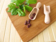 Frutas del espino del Midland, fructus de Crataegi imagen de archivo