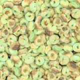 Frutas del fondo de la acuarela Fotografía de archivo libre de regalías