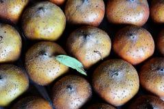 Frutas del níspero presentadas en sótano para madurarse Foto de archivo