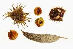 Frutas del otoño Imagen de archivo libre de regalías