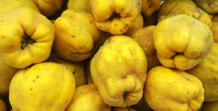 Frutas del otoño de QuinceÅŸ Fotografía de archivo libre de regalías