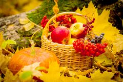 Frutas del otoño, hojas brillantes, aún-vida, manzana roja, hojas amarillas, cesta con las verduras imagenes de archivo
