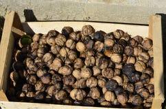 Frutas del otoño nuts Fotos de archivo libres de regalías