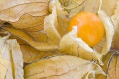 Frutas del Physalis Fotos de archivo libres de regalías