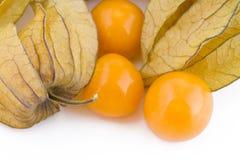 Frutas del Physalis Fotografía de archivo libre de regalías