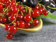 Frutas del verano: Redcurrant Imágenes de archivo libres de regalías