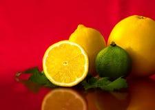 Frutas diversas imagem de stock