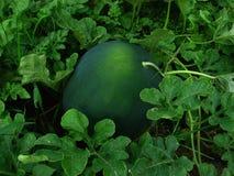 Frutas do jardim fotografia de stock