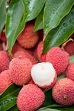 Frutas do Litchi imagem de stock