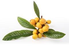 Frutas do Loquat Fotografia de Stock Royalty Free