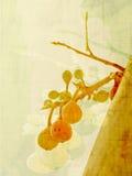 Frutas do outono Foto de Stock