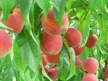 Frutas do outono Fotografia de Stock Royalty Free