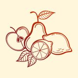 Frutas do vetor Foto de Stock Royalty Free
