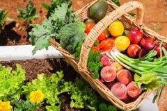 Frutas e legumes orgânicas Fotografia de Stock Royalty Free