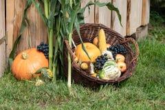 Frutas e verdura do outono fotos de stock royalty free