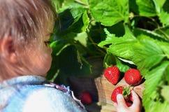 Frutas e verdura - morango de jardim fotografia de stock royalty free