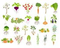 Frutas e verdura nutrition Grupo do ícone ilustração royalty free