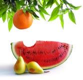 Frutas en blanco Imagen de archivo