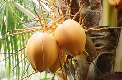 Frutas exóticas imagens de stock royalty free