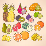 Frutas exóticas ajustadas Foto de Stock