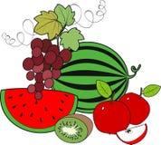 Frutas frescas ilustración del vector