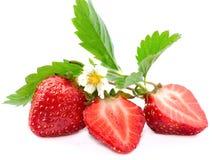 Frutas frescas da morango com flor Fotografia de Stock Royalty Free