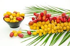 Frutas frescas da tâmara Fotos de Stock