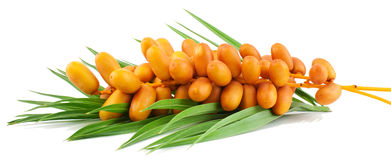 Frutas frescas da tâmara Imagens de Stock Royalty Free