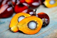 Frutas frescas de la palma de aceite Fotografía de archivo libre de regalías