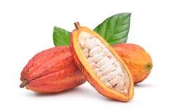Frutas frescas del cacao con mitad cortadas Fotos de archivo libres de regalías