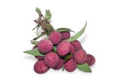 Frutas frescas del lychee fotografía de archivo