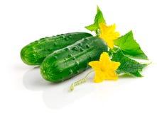 Frutas frescas del pepino con las hojas verdes foto de archivo libre de regalías