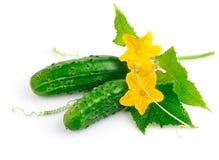 Frutas frescas del pepino con las hojas verdes imagenes de archivo