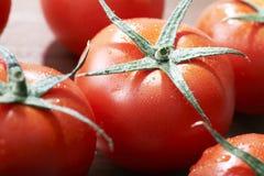 Frutas frescas do tomate Imagem de Stock
