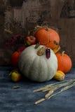 Frutas, maíz y calabazas Fotografía de archivo libre de regalías