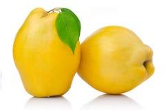 Frutas maduras del membrillo con la hoja y la rebanada aisladas Foto de archivo libre de regalías