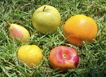 Frutas maduras en hierba verde Fotografía de archivo