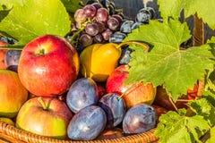 Frutas maduras en un cierre de la cesta para arriba Fotografía de archivo